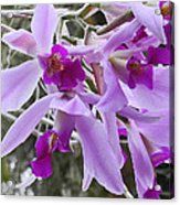 Purple Orchid Personality Acrylic Print