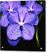 Purple Orchids - Flower Art By Sharon Cummings Acrylic Print