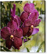 Purple Orchids With Bokeh Acrylic Print