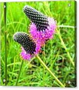 Purple Pair Acrylic Print