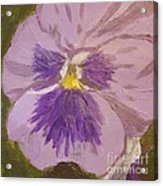 Purple Pansy 1 Acrylic Print