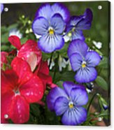 Purple Pansy Flowers By Line Gagne Acrylic Print