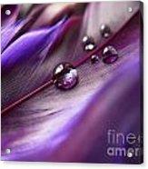 Purple Paradise Acrylic Print