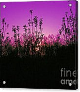 Purple Paradise Sunset By Diana Sainz Acrylic Print