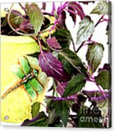 Purple Passion And Dragonfly Pot Acrylic Print