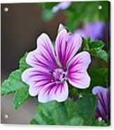 Purple Passion Acrylic Print by Jennifer  King