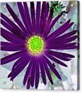 Purple Passion - Photopower 1605 Acrylic Print