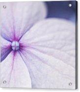 Purple Pinwheel Flower Acrylic Print by Sammy Miller