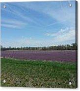 Purple Prairie Acrylic Print