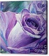 Purple Rose Acrylic Print