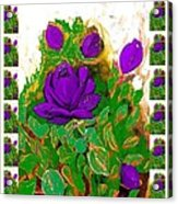 Purple Roses From The Garden 2 Acrylic Print