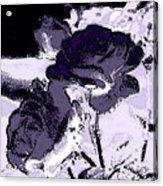 Purple Roses Acrylic Print