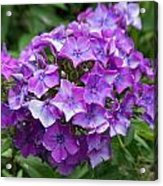 Purple Royale Acrylic Print by Kimberly Ayars
