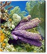 Purple Sponge Acrylic Print