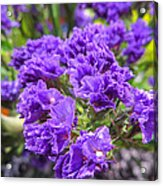 Purple Statice Flower Arrangement Acrylic Print