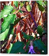 Purple Thorned Blooms In The Cornfield Acrylic Print