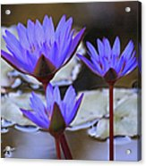 Purple Times Three Acrylic Print