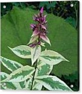 Purple Tipped Flower Acrylic Print