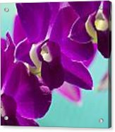 Purple Trio - Orchids Acrylic Print
