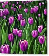 Purple Tulip Field Acrylic Print