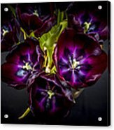 Purple Tulips 2 Acrylic Print