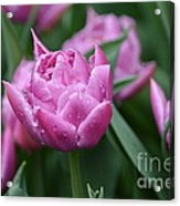 Purple Tulips In The Rain Acrylic Print