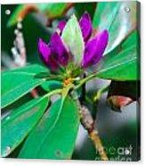 Purple Turtle Head Flower Acrylic Print
