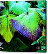 Purple Veins Acrylic Print
