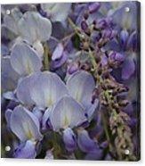 Purple Vine Acrylic Print
