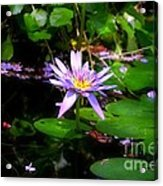 Purple Water Lilly Acrylic Print