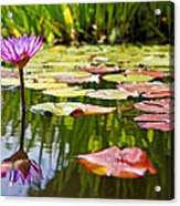 Purple Water Lily Flower In Lily Pond Acrylic Print