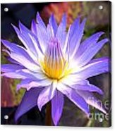 Purple Waterlily With Fall Lilypads Acrylic Print