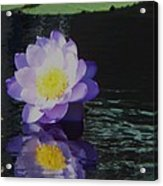 Purple White Yellow Lily Acrylic Print