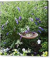 Purple Wild Flowers 1 Acrylic Print