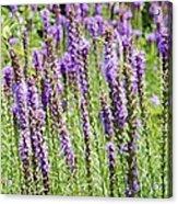 Purple Wild Flowers3 Acrylic Print