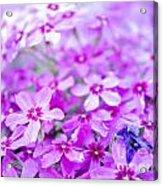 Purple Wildflower Acrylic Print