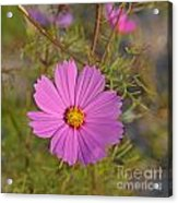 Purple Wildflower Acrylic Print