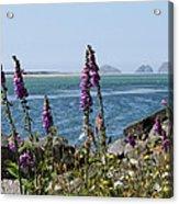 Purple Wildflowers At Netarts Bay Acrylic Print