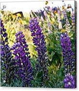 Purple Wildlfowers Acrylic Print