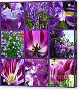 Purple Window Acrylic Print