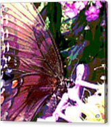 Purple Wings Acrylic Print