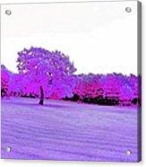 Purple World Acrylic Print