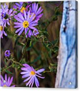 Purples And Blue Acrylic Print