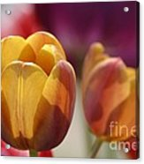 Purpleyellowtulips7016 Acrylic Print