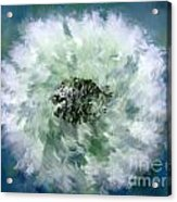 Pursuit Of Happiness Blue White Acrylic Print