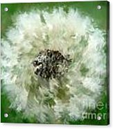 Pursuit Of Happiness Acrylic Print