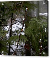 Pussy Willow In The Pines Acrylic Print