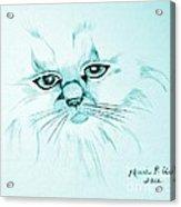 Pussycat Blues Acrylic Print