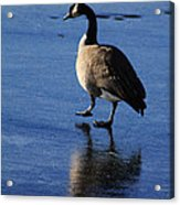 Put Your Best Foot Forward Acrylic Print