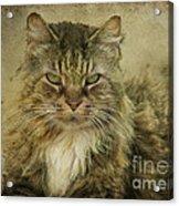 Putz Acrylic Print by Susan Kimball